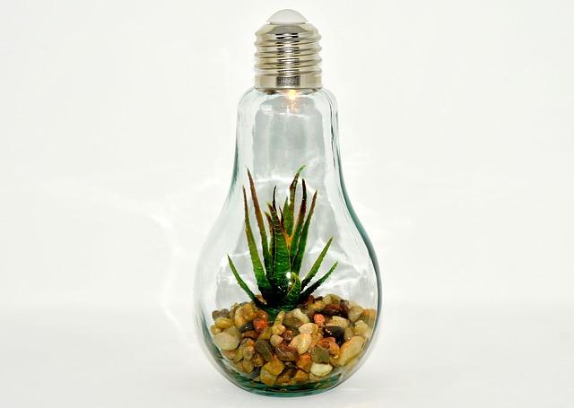 rostlinka v žárovce.jpg