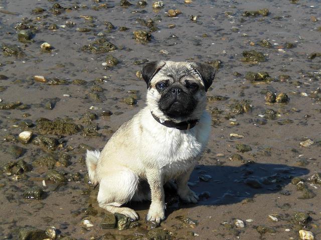 pes mops