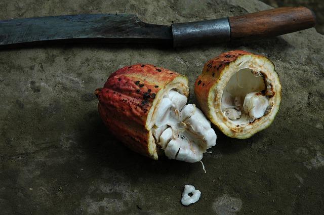 vnitřek kakaového bobu
